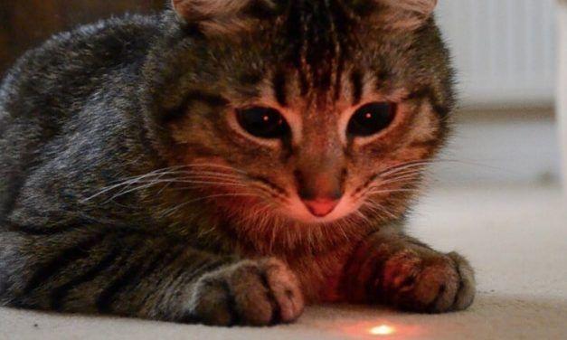 ¿Es peligroso para los gatos jugar con el puntero láser?