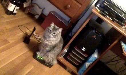 Gatos sentados en los sitios más inoportunos