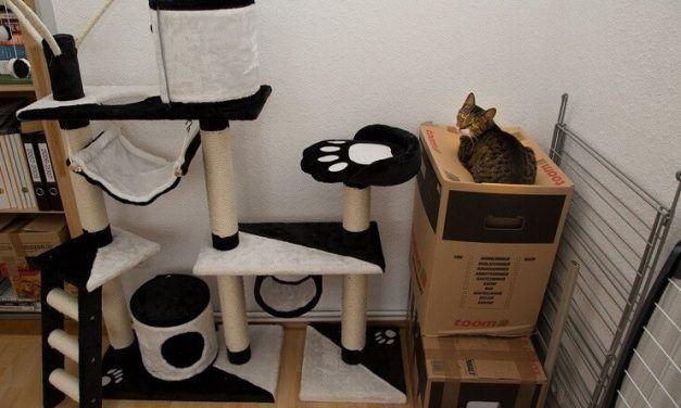 Gatos y juguetes: una relación extraña