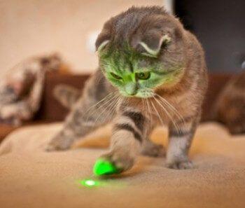 Peligros en gatos del puntero laser