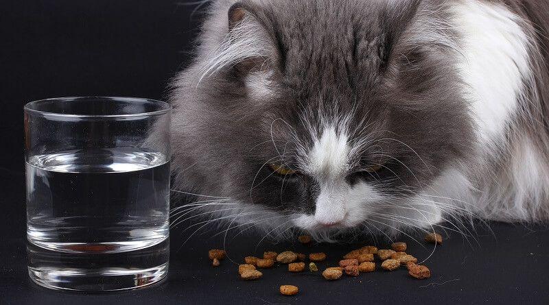 Qué comen los gatos? - Zona gatos