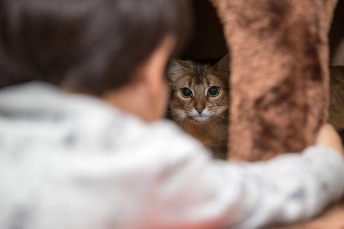 Comportamiento de una gata embarazada