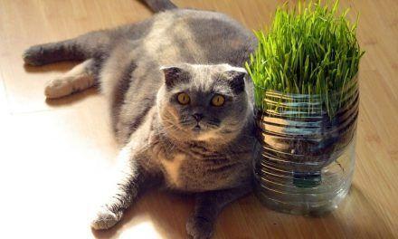 Formas de hacer adelgazar a un gato obeso