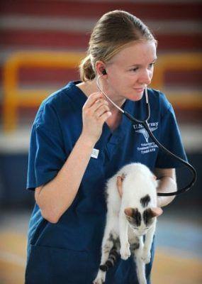 Adoptar un gato callejero - veterinario