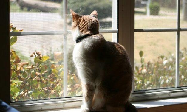 Convertir a un gato de exterior en gato de interior