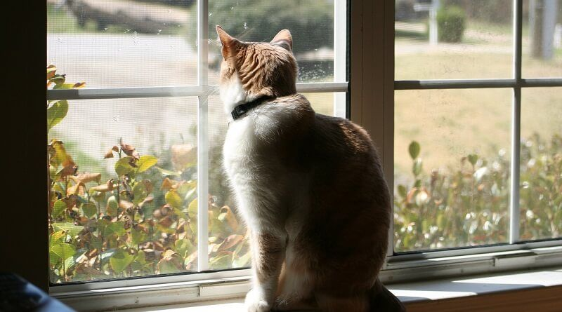Convertir un gato de exterior en gato de interior