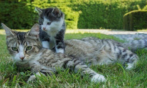 ¿Cuándo se destetan los gatos?