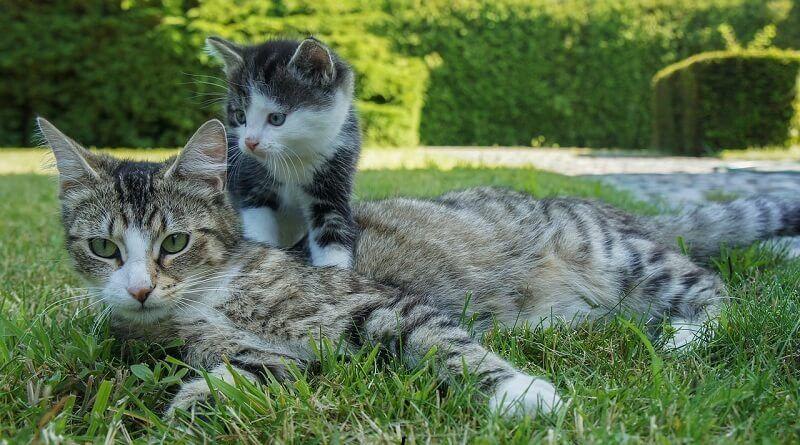 Cuándo se destetan los gatos