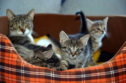 Destete de los gatos