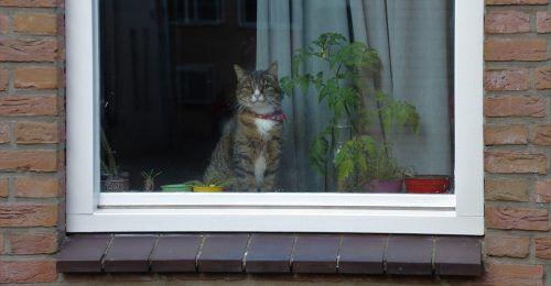 Gato callejero en casa