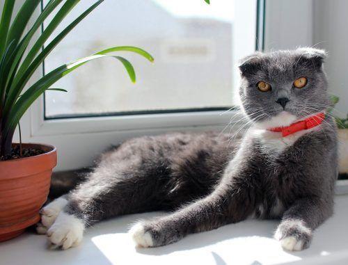 Gato de exterior en casa