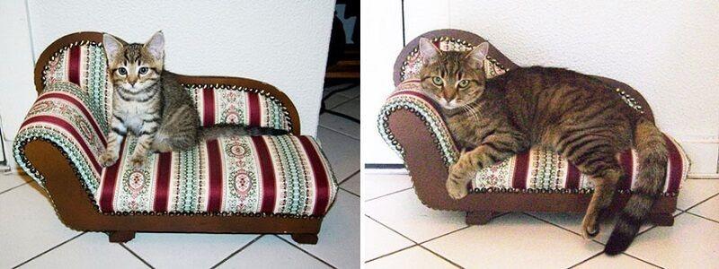 Gatos antes y después de haber crecido 10