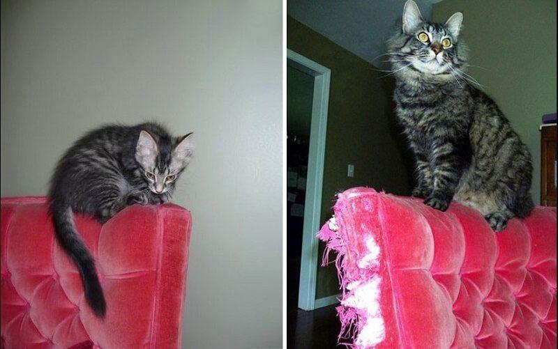 Gatos antes y después de haber crecido 14