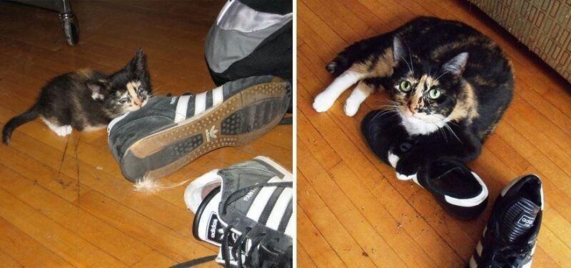 Gatos antes y despues de haber crecido 2
