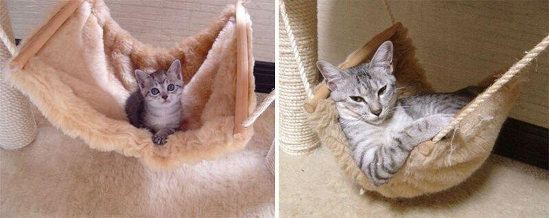 Gatos antes y despues de haber crecido 3