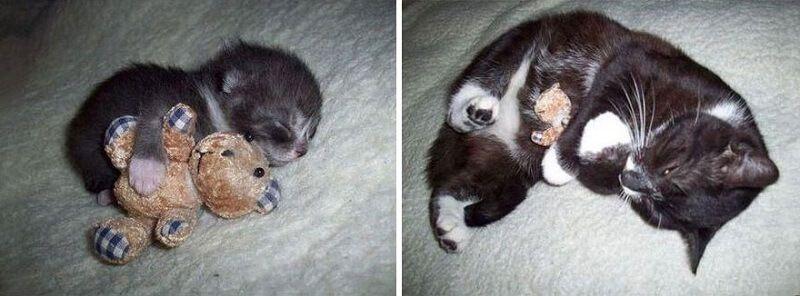 Gatos antes y después de haber crecido 6
