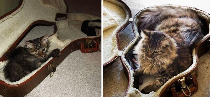 Gatos antes y después de haber crecido 8
