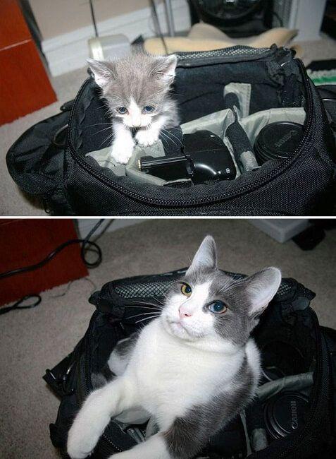 Gatos antes y después de haber crecido 9
