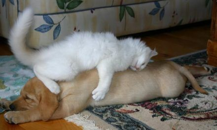 Gatos que han decidido que dormir sobre el perro es buena idea