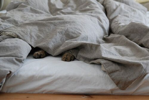 Gato que duerme en la cama
