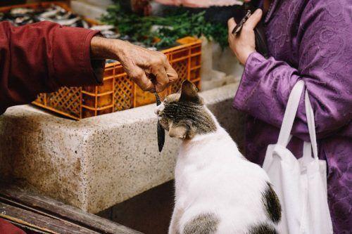 Gato que le huele el aliento a pescado