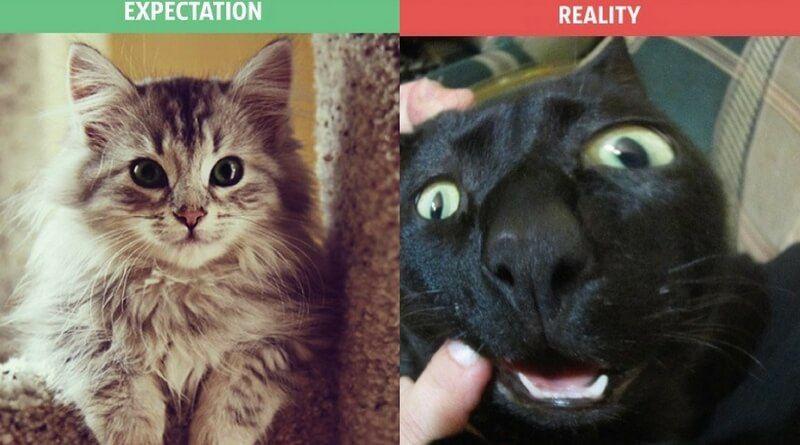 La vida con un gato expectativas vs realidad