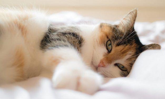 ¿Por qué mi gato duerme conmigo?