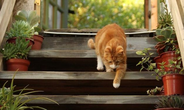 ¿Por qué mi gato me sigue a todos lados?