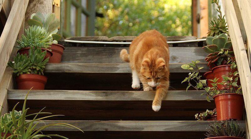 Por qué mi gato me sigue a todos lados