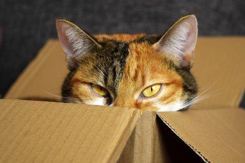 Cambio de casa con gatos