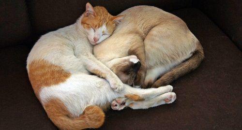 Convivencia entre gatos