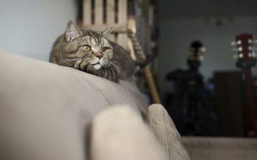 Evitar que el gato arañe el sofá