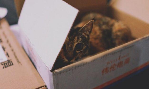 Mudanza con gatos: lo que debes hacer