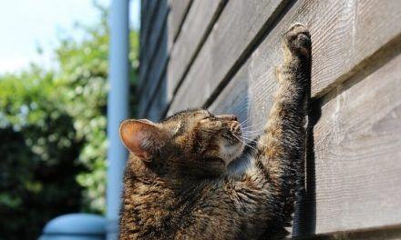 Por qué los gatos arañan los muebles (y cómo evitarlo)
