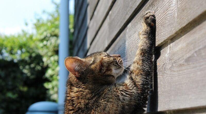 Por qué los gatos arañan los muebles