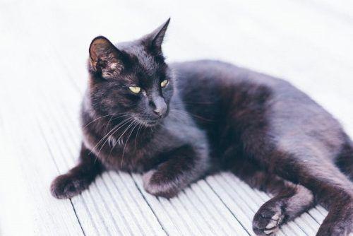 Síntomas de los gatos con fiebre