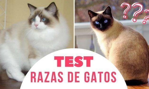 ¿Cuánto sabes sobre razas de gatos? Acierta más de 12/15 en este TEST