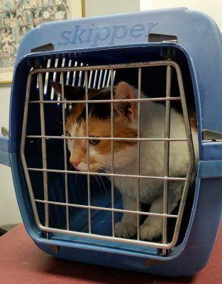 Transportín para viajar con tu gato