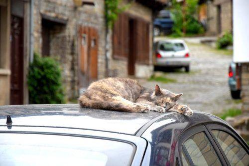 Trayectos en coche con un gato