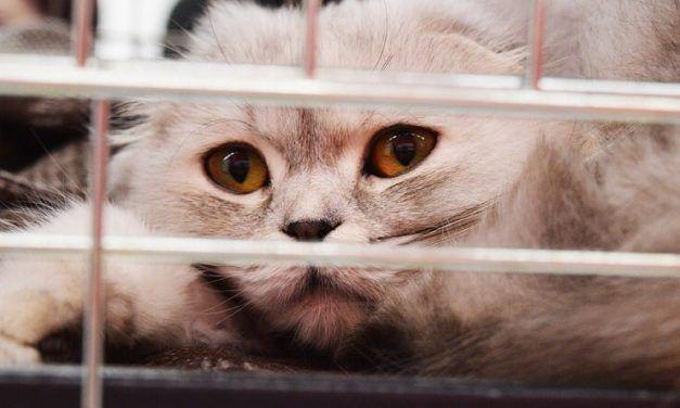 Cómo meter a un gato en el transportín