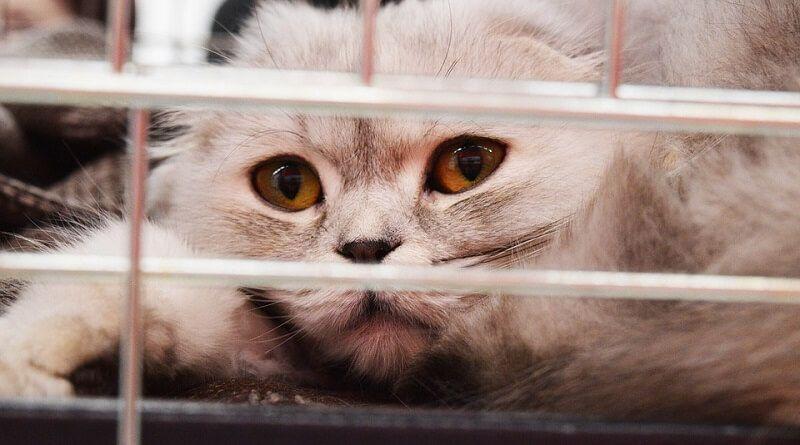 Cómo meter a un gato en el transportin