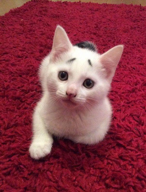 Gatito preocupado