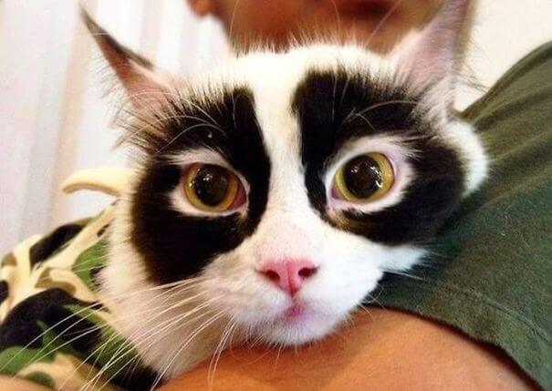 Gato con antifaz