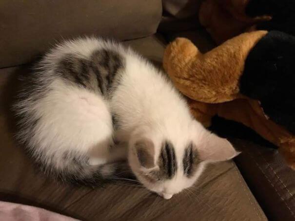 Gato com desenho de coração