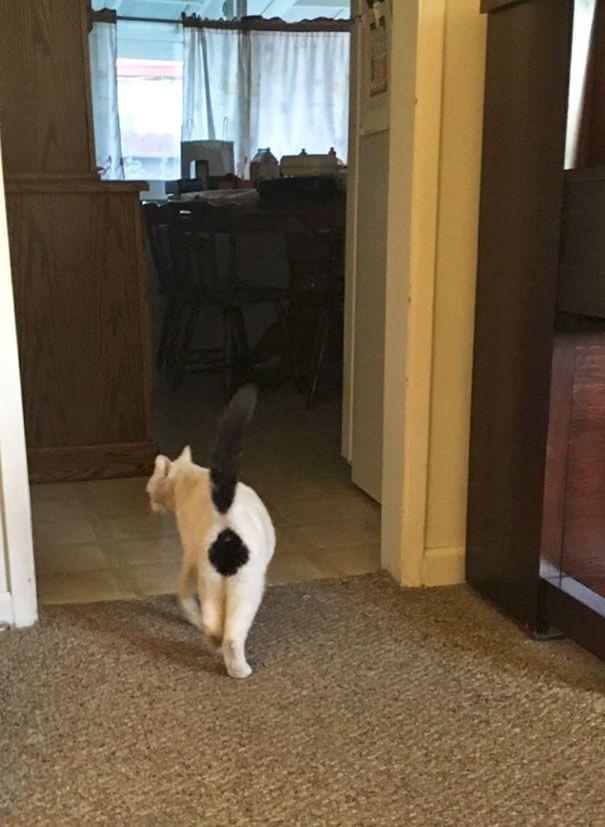 Gato con exclamación en el pelaje