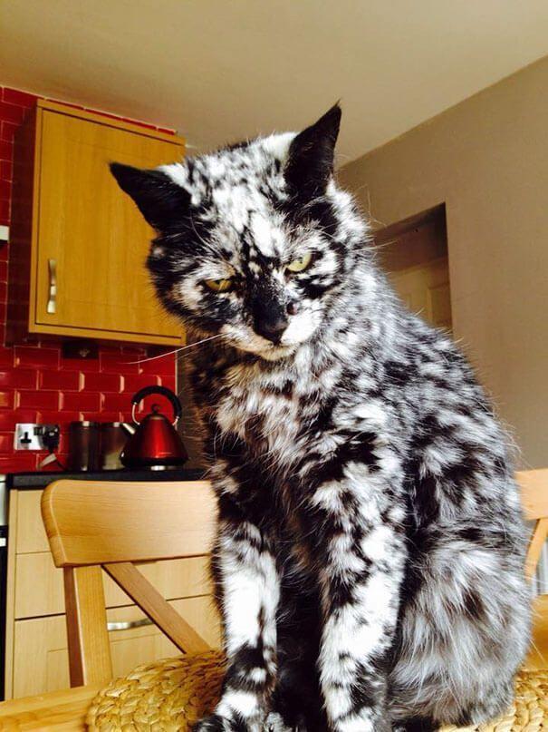 Gato con precioso pelaje