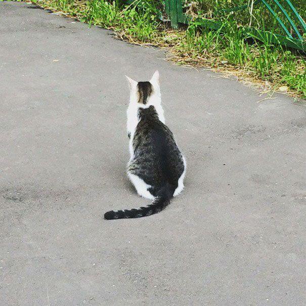 Gato con un gato a su espalda