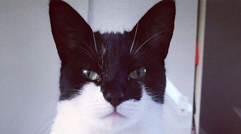 Gatos que llamarán tu atención por su pelaje