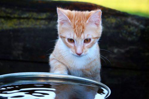 Mi gato no bebe agua del cuenco