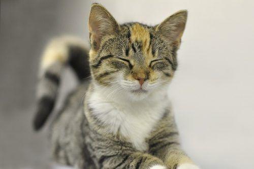 Por qué ronronean los gatos cuando los acaricias